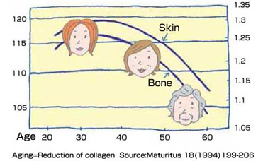 Collagen decreases by aging